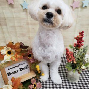 ☆お客様ワンコ☆MIX犬のモカくん☆