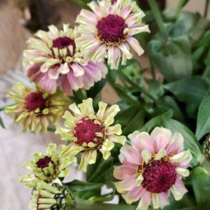 色とりどりのお花♪