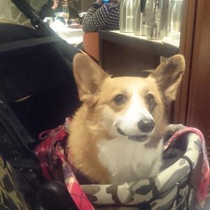 ペットOK!愛犬と一緒に入れるラーメン店♪