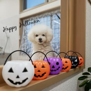 ☆10月の定休日のお知らせ☆