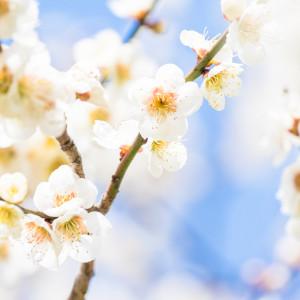 """H30/4/15(日) """"かしまふれ愛さくら祭り"""""""